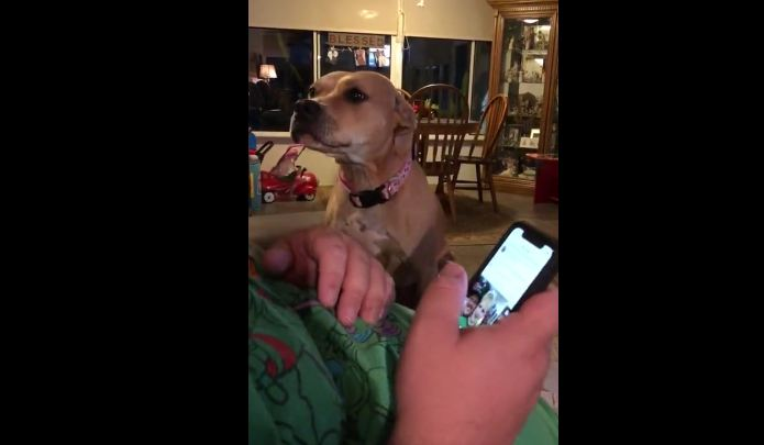 Dog Demands Attention From Owner After Spending Several Days Apart