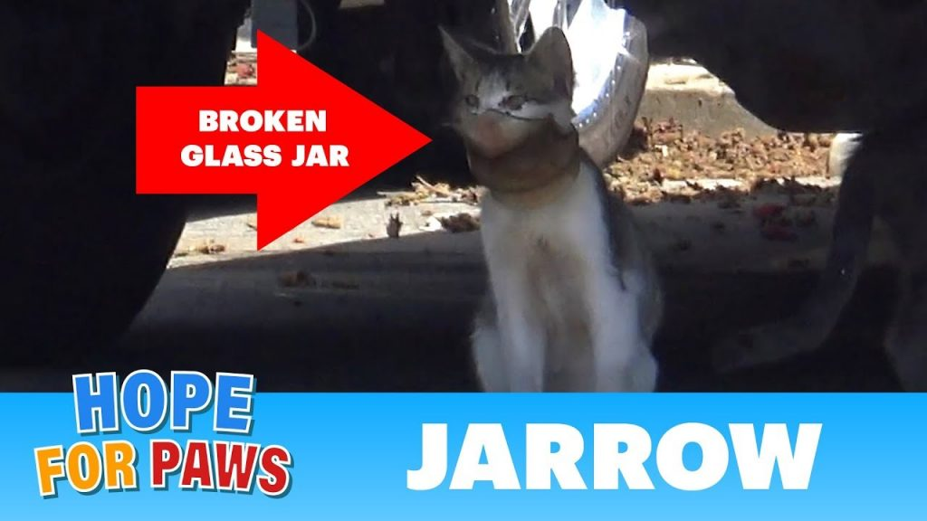 Rescuers Had No Choice But To Sneak Up On A Cat With A Broken Jar Over Its Head