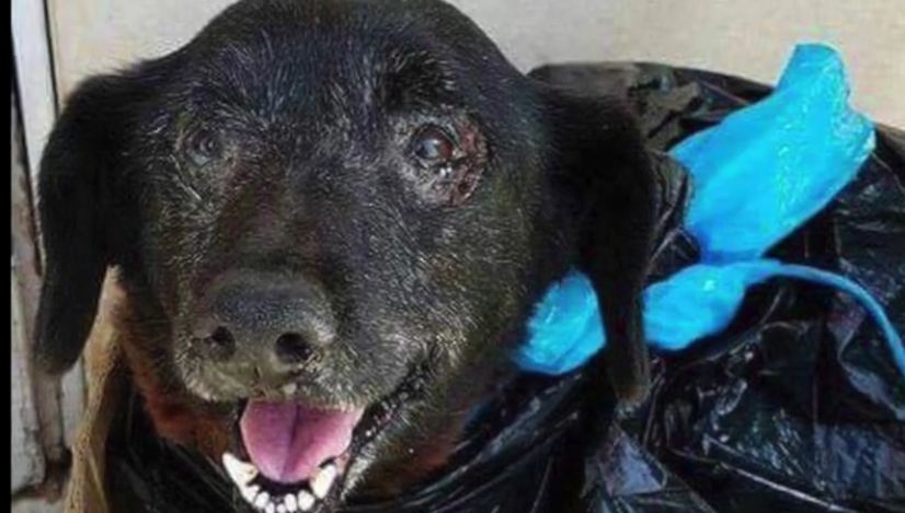 Dumped In A Trash Bag, Sweet Senior Dog Gets Second Chance