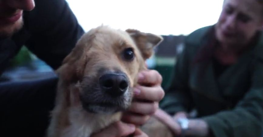 Dog with half a face reunited with family