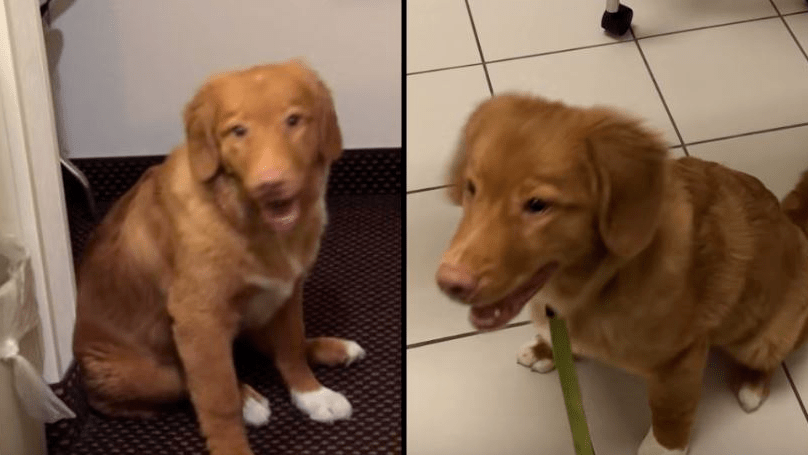 Puppy Poisoned by Meth Left in Hotel