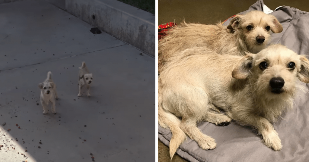 Yogi and Boo-Boo took refuge in a schoolyard and evaded rescue for weeks until…