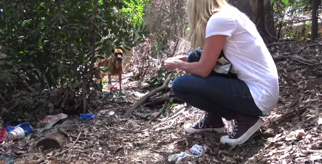 Abandoned And Afraid On A Big Golf Course, This Dog Didn't Know Whom To Trust