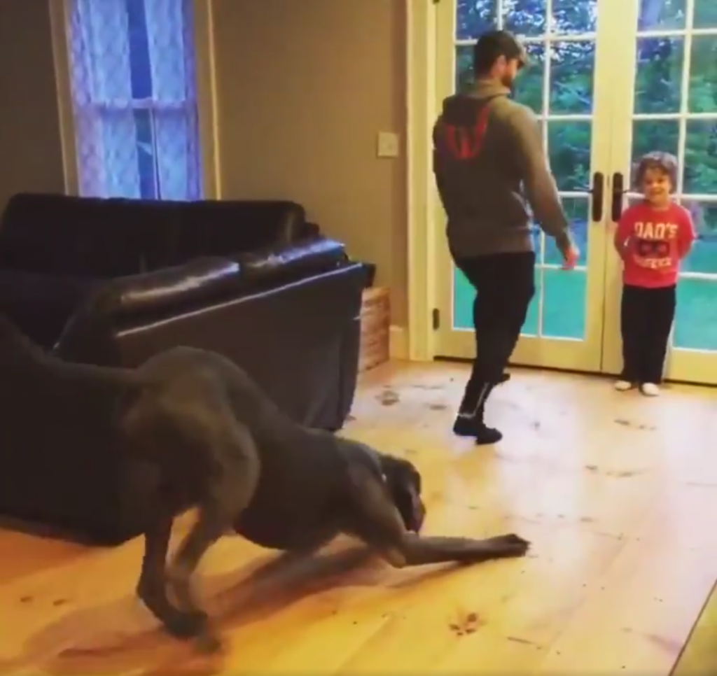 Great Dane Just Wants To Fit In — Even If It Means Exercising With Dad