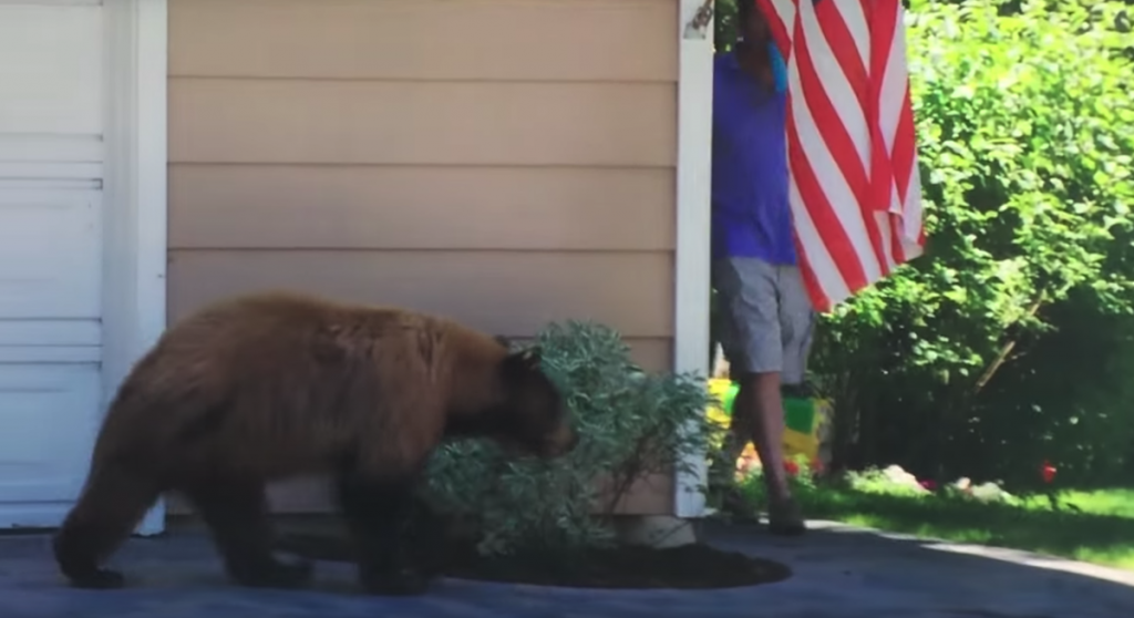 Man And Bear Have The Same Reaction To Running Into Each Other