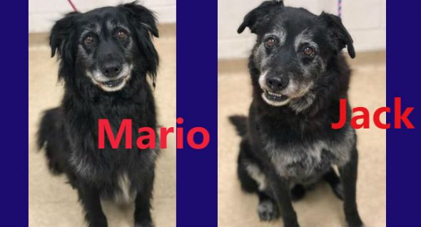 Lab Report: Bonded brothers Mario & Jack have found themselves in rescue at age 12