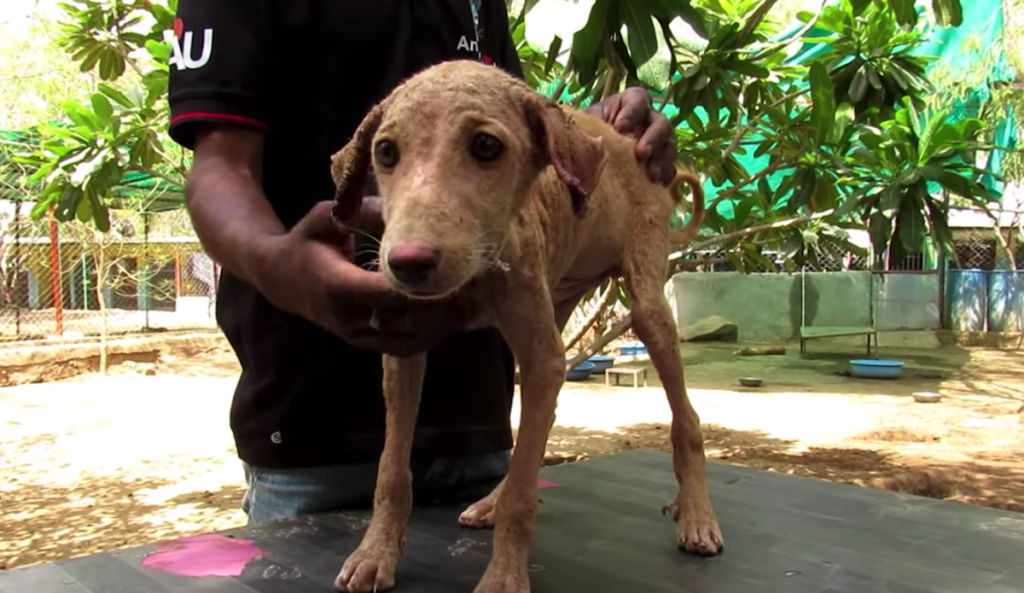 Puppy Found On The Streets Gives Rescuers A Look As If He's Asking For Help