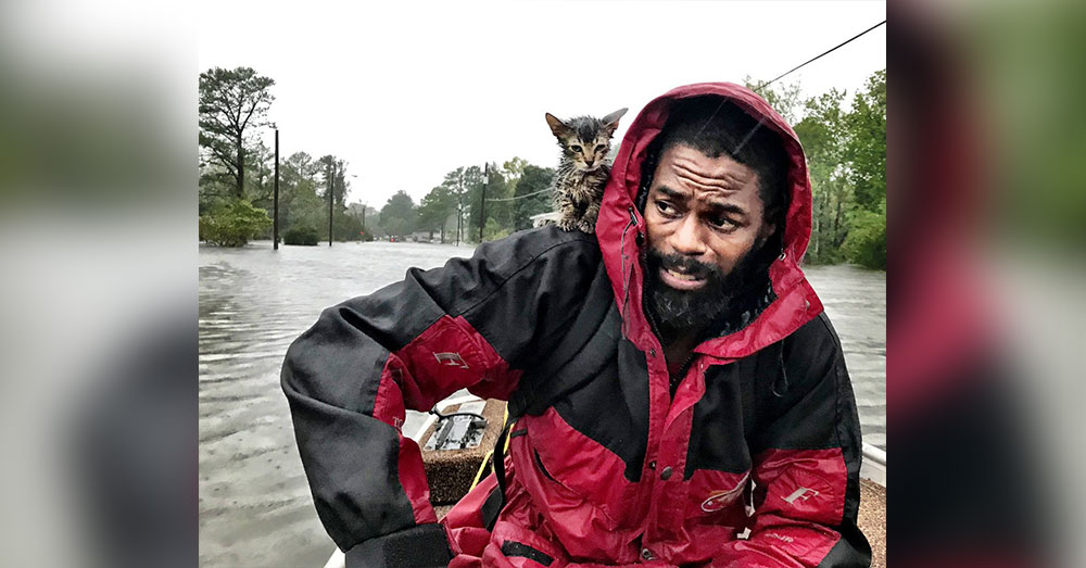'Survivor' Kitten Clings To Man's Raincoat As They Escape Hurricane Florence