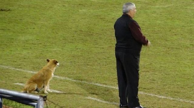 Stray Dog Becomes 'Assistant Coach' To Soccer Team After Getting a Piece of Pie