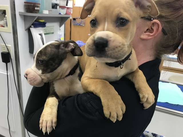 While On A Job, Man Finds Two Puppies With Hair Ties Around Their Mouths