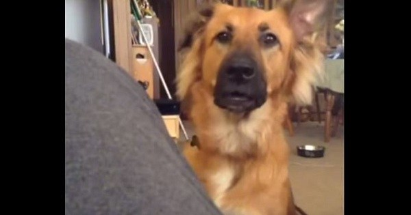 Dog Throws Overly-Dramatic Fit When He Doesn't Get What He Wants