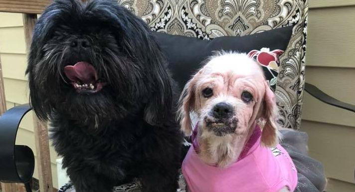 "Sweet little dog discovered in trash bag finds her ""happily ever after"""