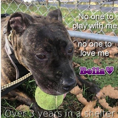 Bella unnoticed in shelter for three and a half years