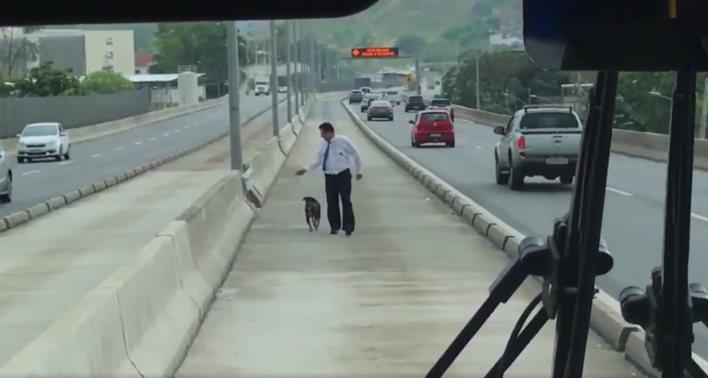 Bus Driver Pulls Over, Walks Toward Dog In The Middle Of The Highway