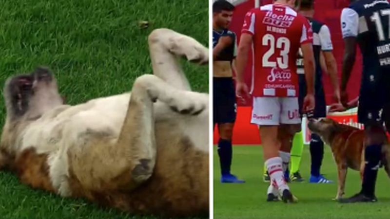 Dog Stops Soccer Match And Insists On Being Petted By The Players