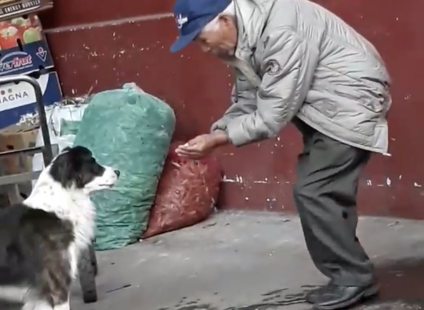 Man's Simple Act Of Kindness For Dog In Need Has Touched Hearts All Over