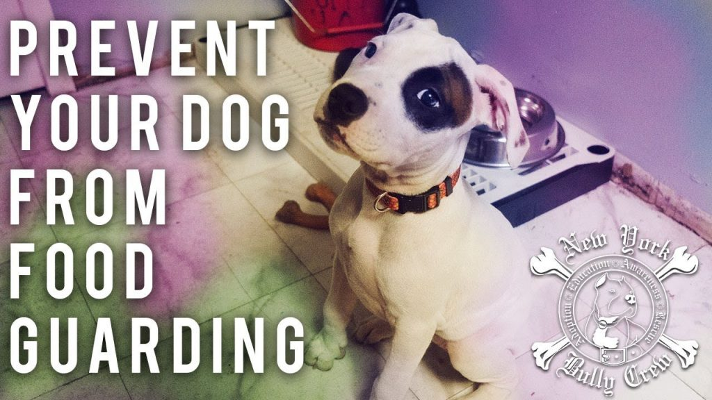 How to Prevent Your Dog from Food Guarding
