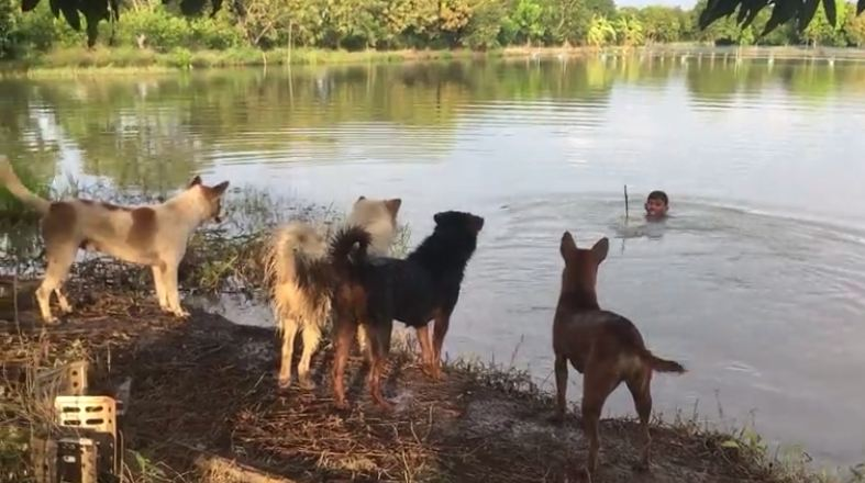 Dog Owner Plays Prank on Furry Friends