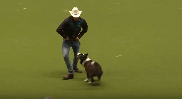 Hound Dog line dance - YouTube |Dog Line Dance