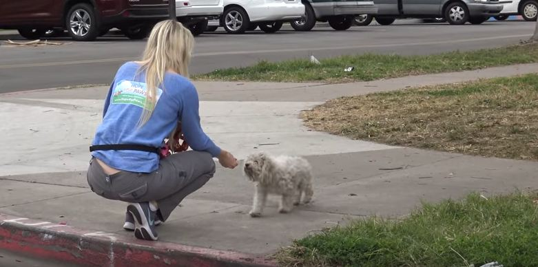 This homeless dog was not going to surrender without a fight!