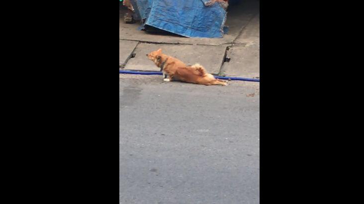 Dog Fakes Injury for Food