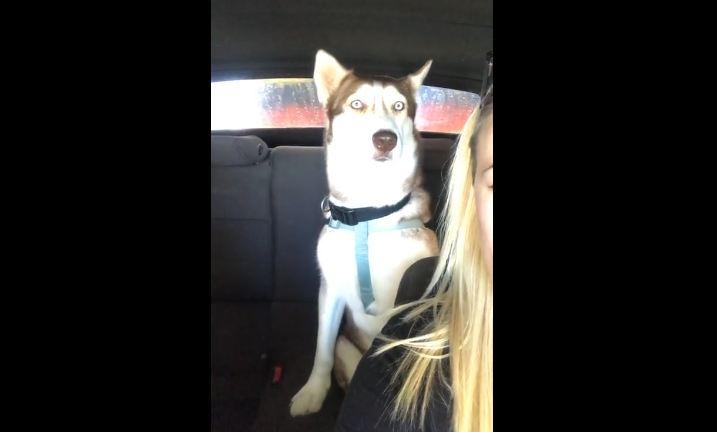 Bewildered Dog Sits In Utter Disbelief At Car Wash