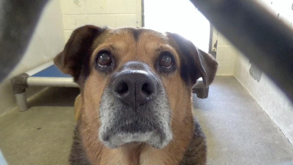 Family didn't want responsibility – left senior dog at busy animal shelter
