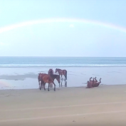 Beautiful Moment Captured As Horses Relax And Play On Beach Under A Rainbow