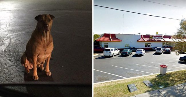 Oklahoma con job dog pretends to be a stray to get free McDonald's burgers