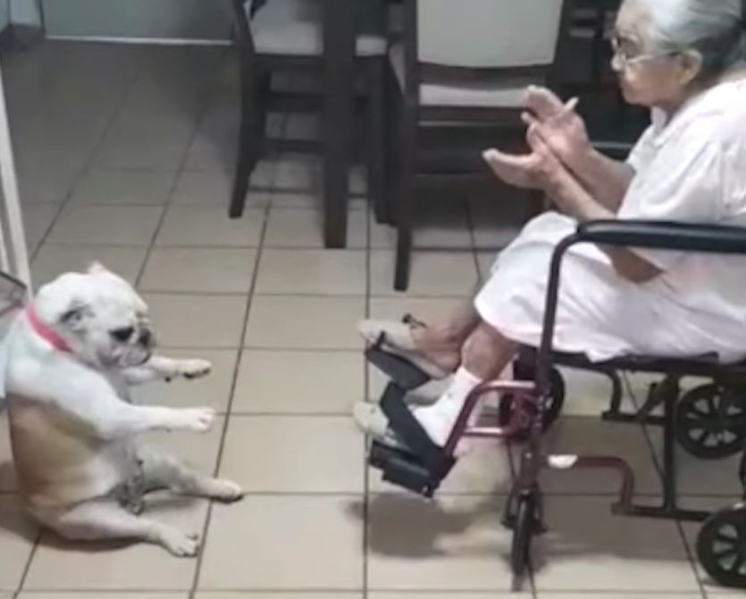 Grandma Claps And Sings, And Her Dog Can't Help But Groove To The Beat