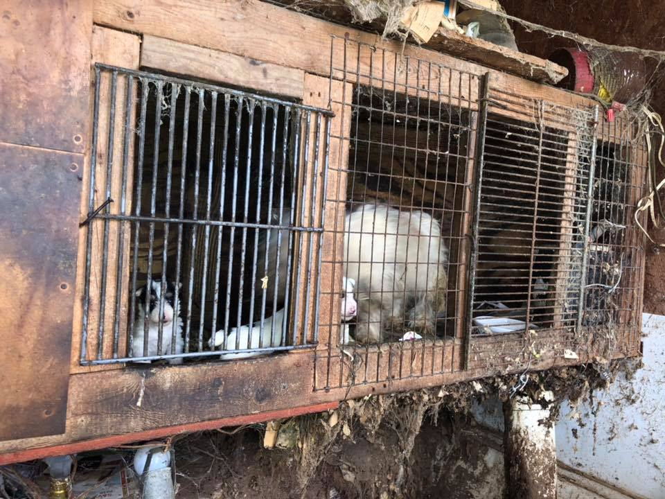 Over 100 dogs removed from deplorable conditions – living in filth and darkness