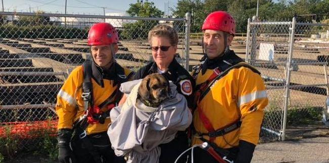 Missing puggle found clinging to pipe above New Jersey water pit