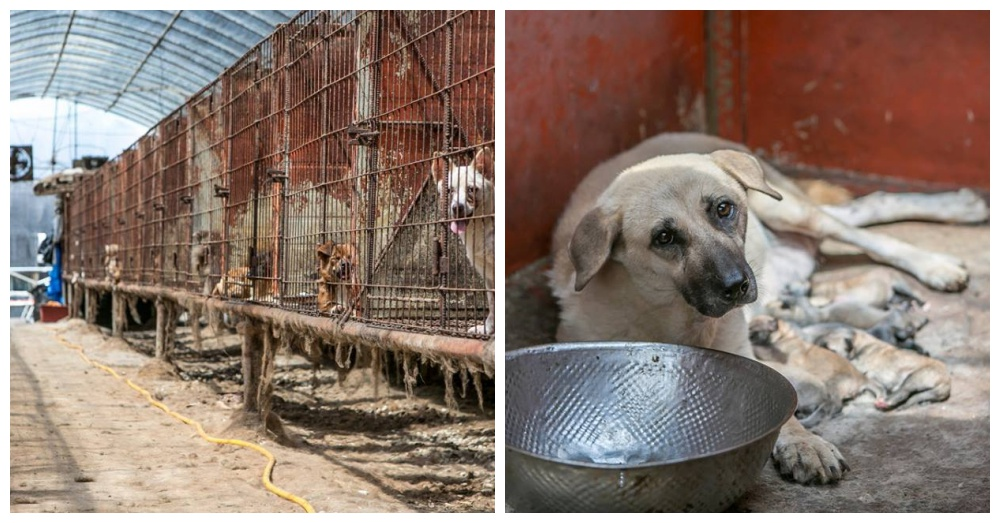 Over 200 Dogs Rescued From Death Row
