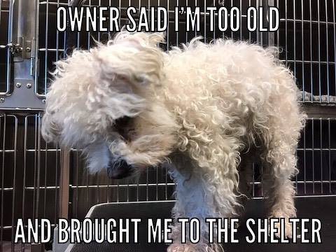 Owner surrendered dog to shelter for being 'too old'