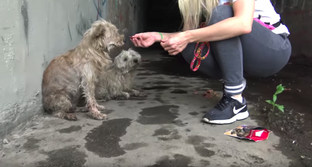 Two Dogs Cried Out For Help From The Sewer Until Someone Heard Them