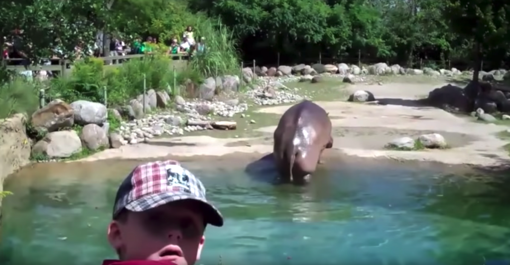 Zoo-Goers Are Checking Out A Hippo When It Rips The Biggest Fart