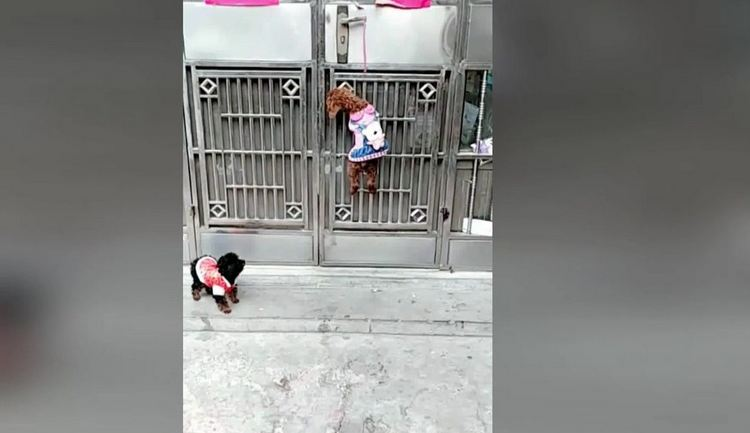 Jail-breaking dogs use teamwork to sneak into house