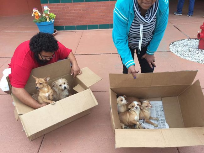 Tears: Seven dogs in cardboard boxes hauled into dump at shelter