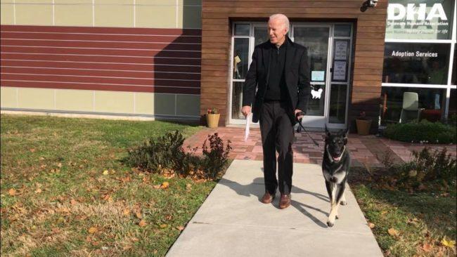 Former Vice President Biden adopts shelter pooch