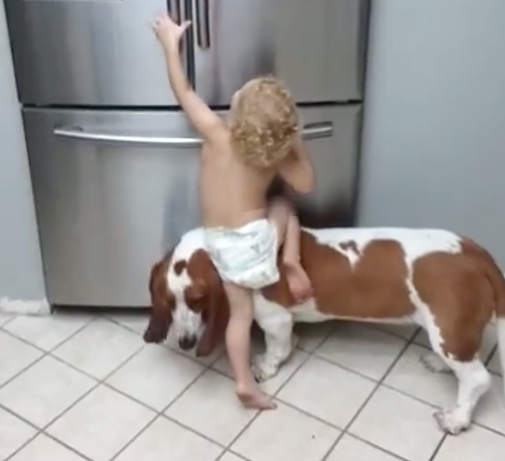 Boy And Dog Team Up To Find Out What's Good To Eat