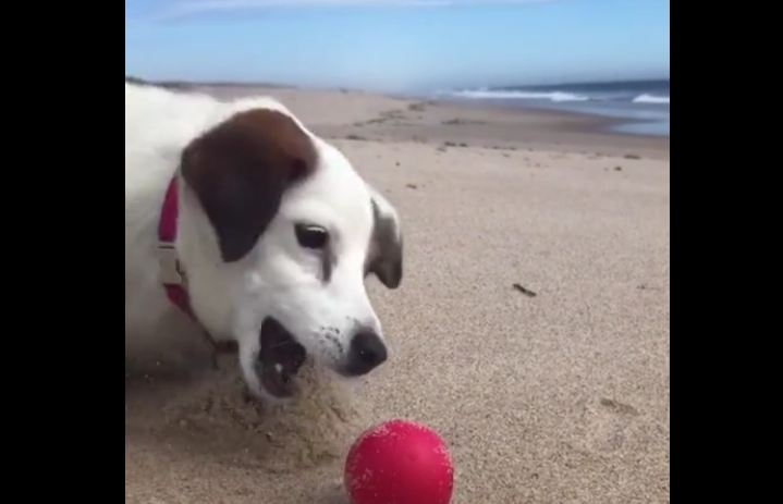 Playing catch the red all on beach with dogy