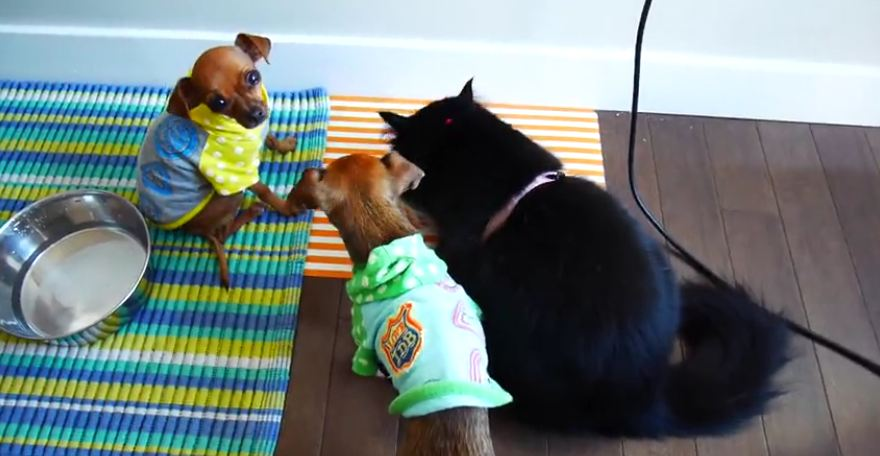 Cat eats dog food