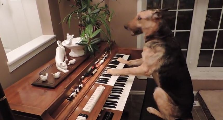 A Dog Turns On The Piano, But What She Does Next Will Shock You!