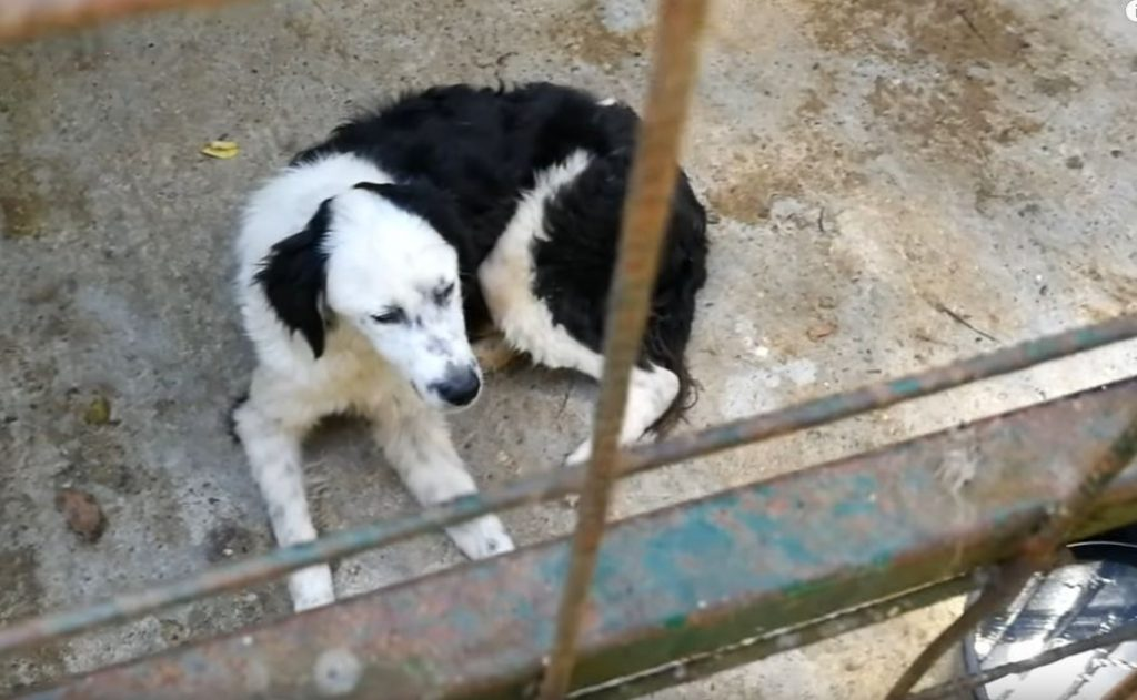 Rescue Of Scared Lonely Dog Whose Heart Was Crying For Help