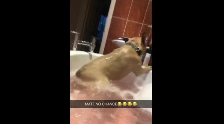 Splish Splash, Puppy's Taking a Bath! Woman's Dog Joins Her in Tub
