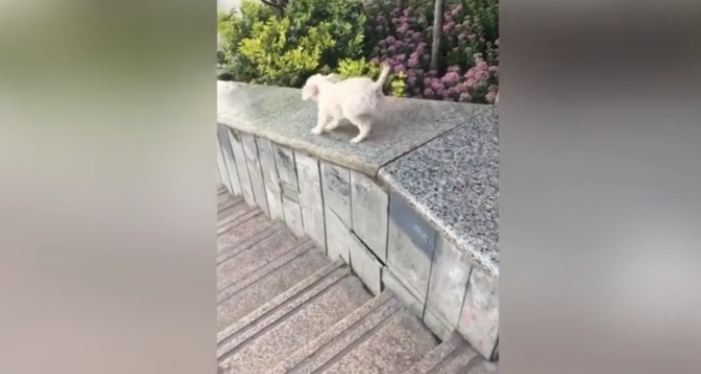Cute puppy enjoys sliding down on smooth stair wall