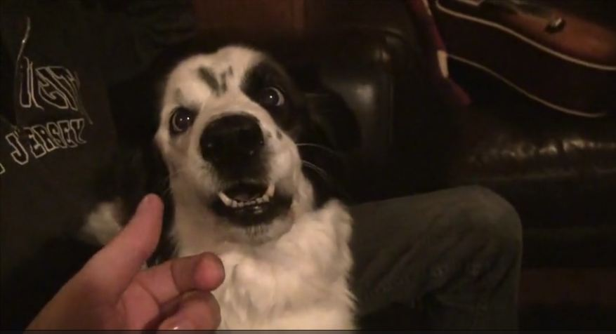 Dog Gets Hysterical When Owner Tries To Steal Her Tongue