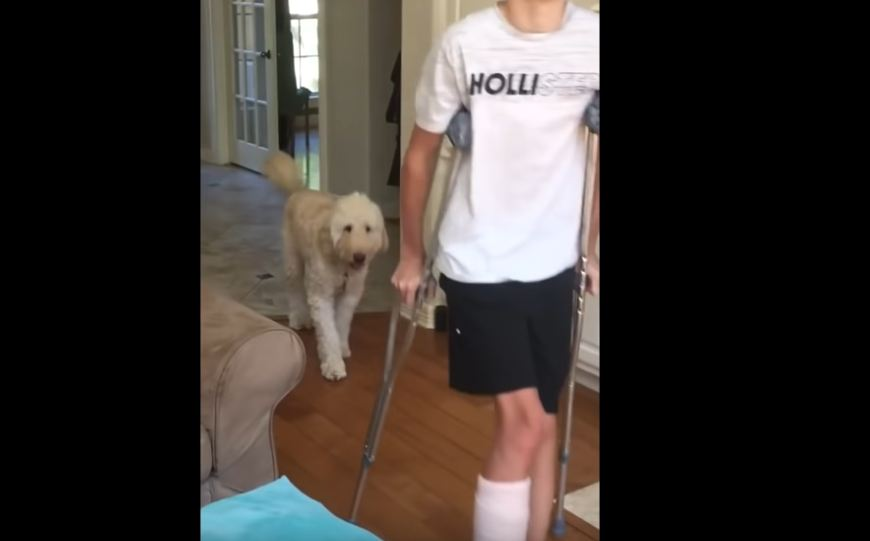 Dog Hilariously Mocks Teenager With Broken Leg