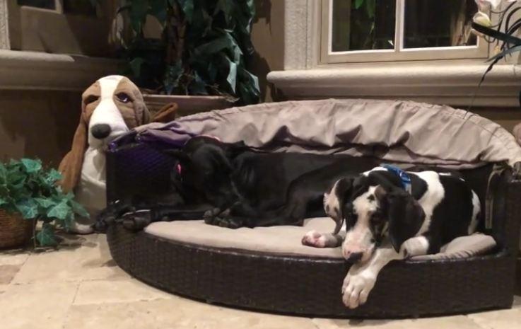 Sleepy doggies nap together on their cabana bed