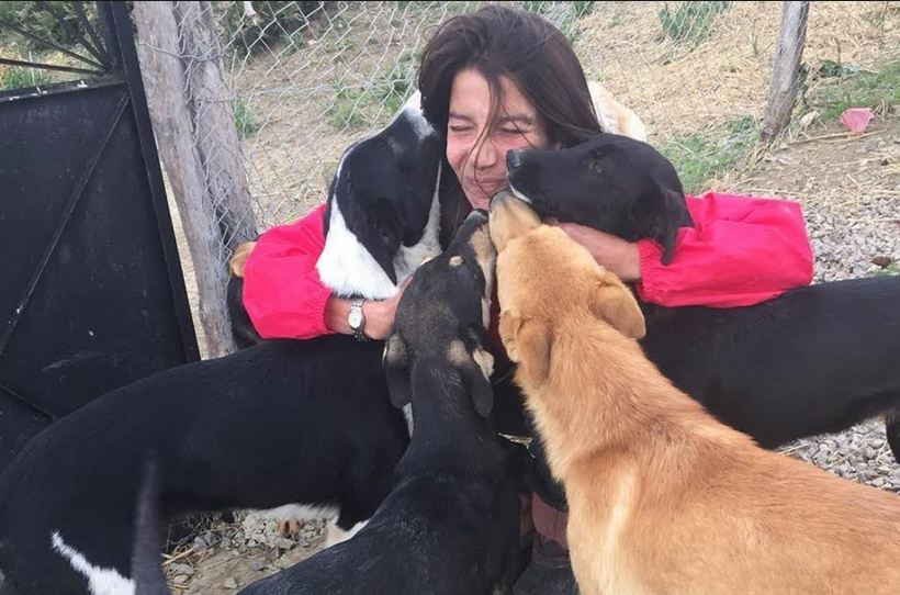 Woman Gives Up Everything To Save All The Stray Dogs